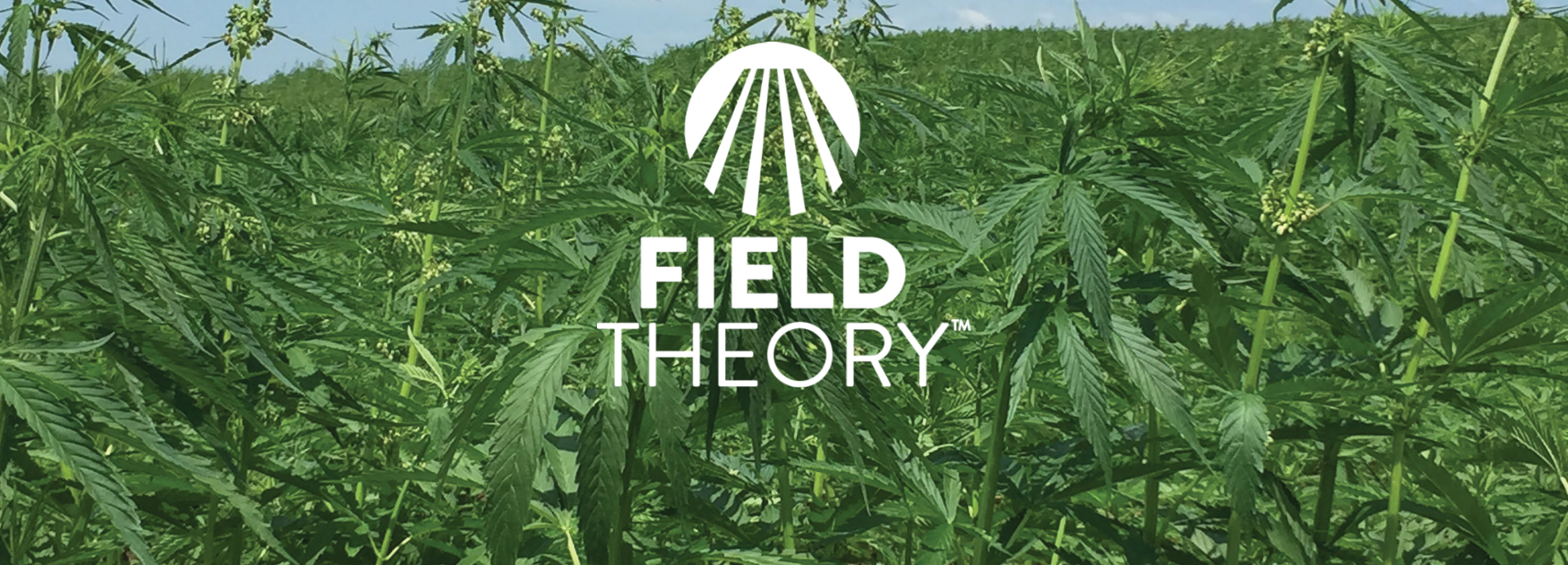 Field Theory Hemp